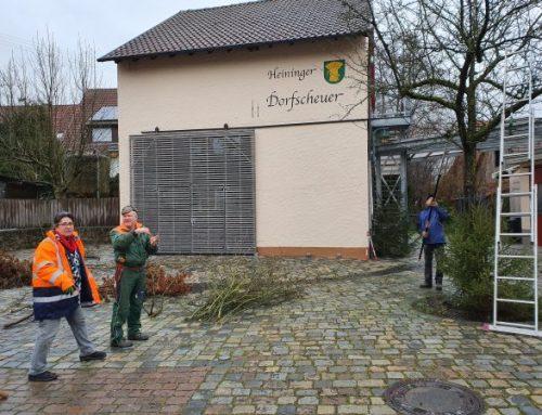 Bäume am Heininger Dorfplatz schneiden – 27.12.2019